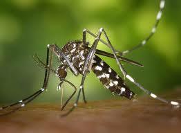 Verão: Cuidados com a dengue em época de chuva