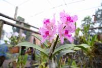 Espaço Botânico recebeu mais de 1500 visitantes em setembro