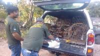 Fiscalização da Serra apreende 39 pássaros silvestres
