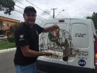 Semma recolhe 29 aves silvestres em Palmeiras