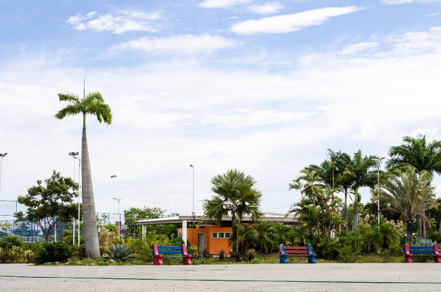 Parque da Cidade vai ganhar 500 novas árvores