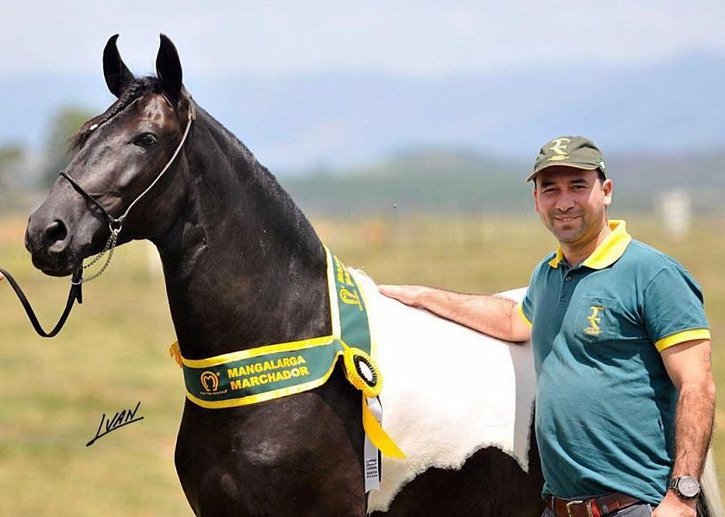 Serra vai sediar II Copa de Marcha do Cavalo Mangalarga Marchador