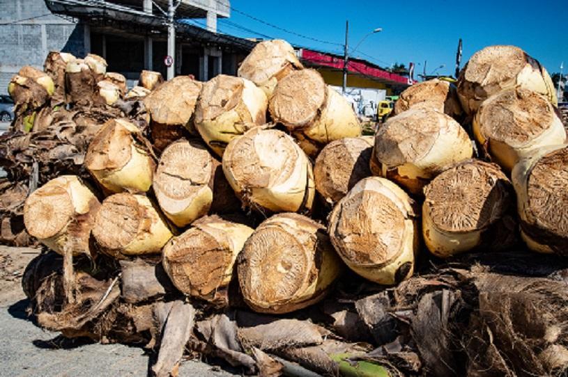 Equipes intensificam limpeza em pontos de venda de palmito na Serra
