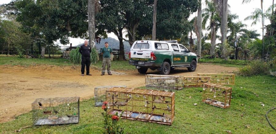 200 pássaros silvestres são soltos em Muribeca