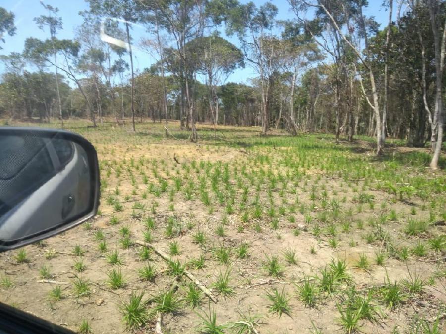 Flagrante de desmatamento em Costa Bela no Dia da Árvore