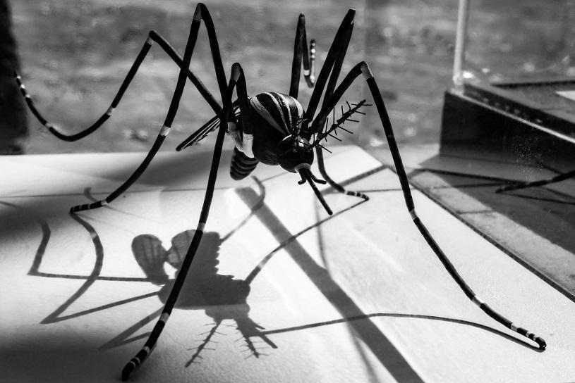 Servidores da Saúde passam por capacitação sobre dengue, zika e chikungunya