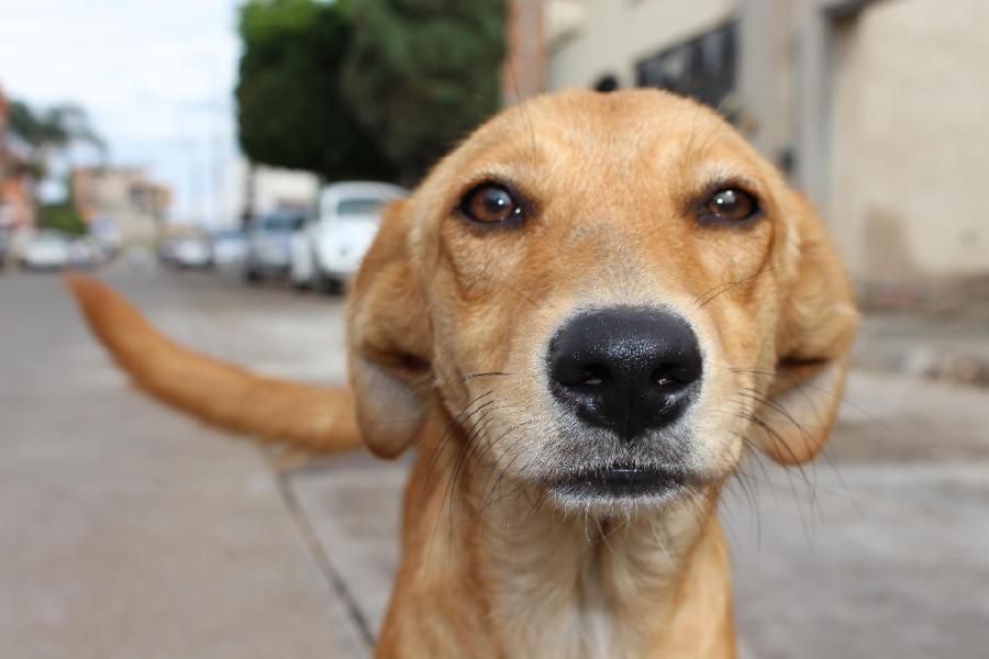 Oito cães vítimas de maus tratos resgatados em Barcelona