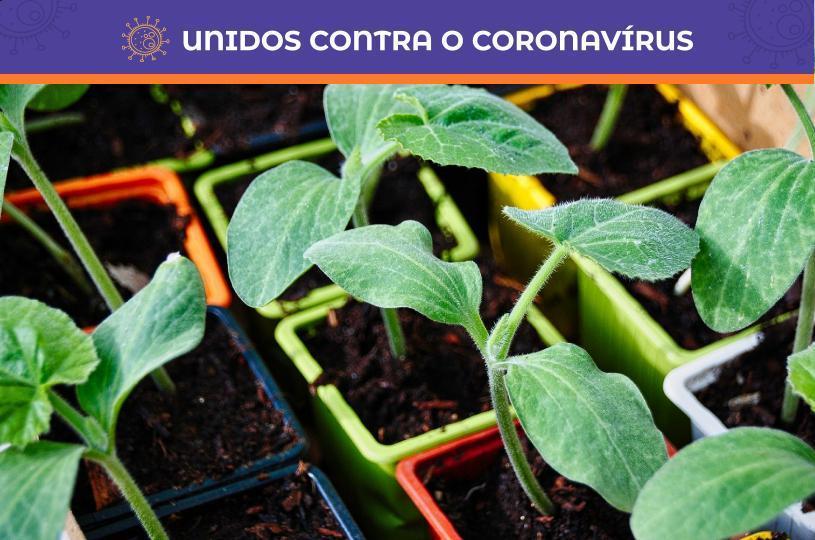 Aprenda a cultivar horta em casa durante a quarentena
