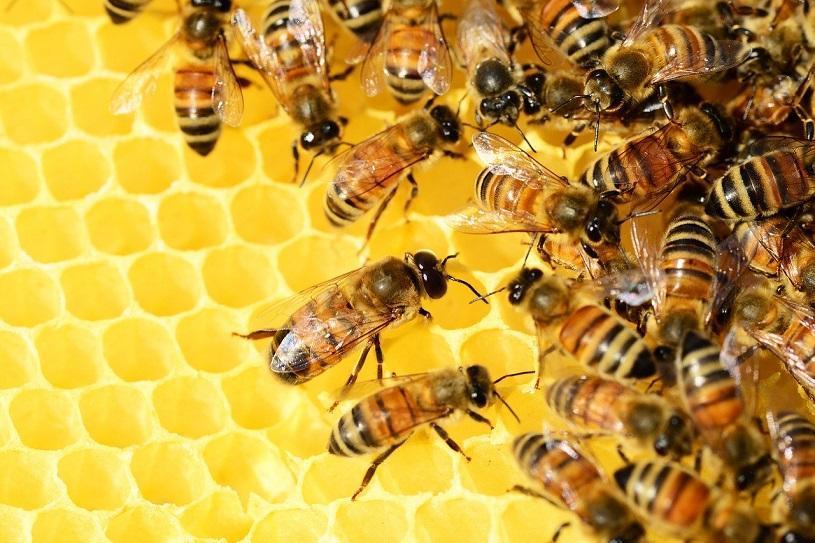 Seap incentiva a união de criadores de abelhas sem ferrão