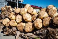 Fiscalização faz ação contra venda ilegal de palmito e caranguejo