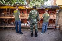 Semma apreende 16 galos vítimas de maus-tratos na Serra